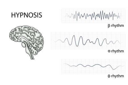 notion: illustration of the brain, alpha, beta, and theta rhythm. Illustration