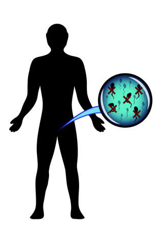 fertilisation: illustration of male silhouette and inactive sperm