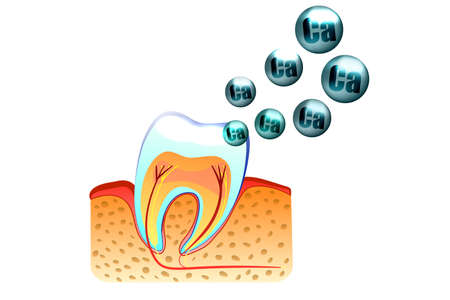 illustration of teeth and saturation with calcium of tooth enamel Illustration