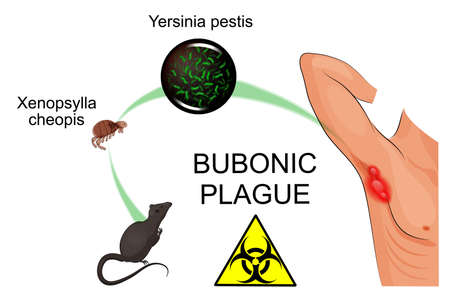 contagious: illustration of the bubonic plague pathogen, contagious