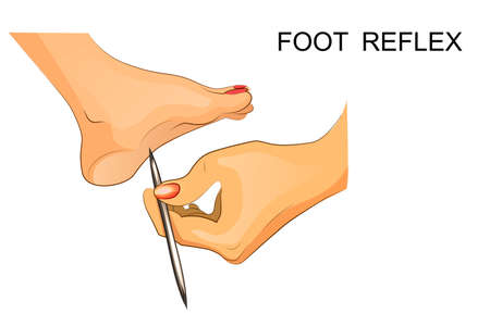 vector illustration of reflexes of the foot. Illustration