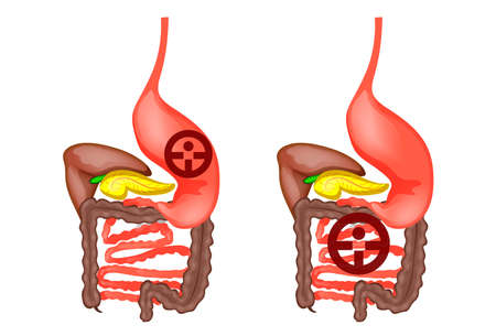 Vector illustration of the human digestive tract Illustration
