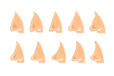 Illustration of the shape of the nose Illustration