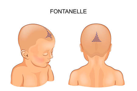 vector illustration of a Fontanelle in the infant 免版税图像 - 91096904