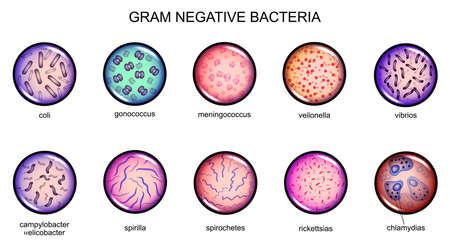 Vector illustration of gram-negative bacteria microbiology in culture. Ilustração