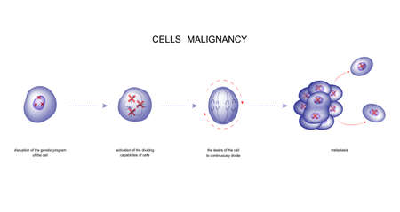 vector illustration of a process of malignancy cells