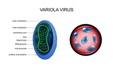 vector illustration of variola, smallpox, virus. especially dangerous infections