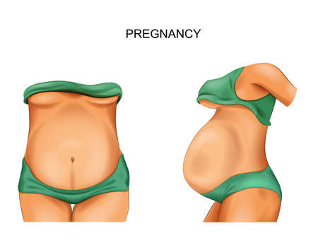 vector illustration of a pregnant woman. pregnant belly