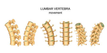 Vector illustration of movement in lumbar vertebrae Illustration