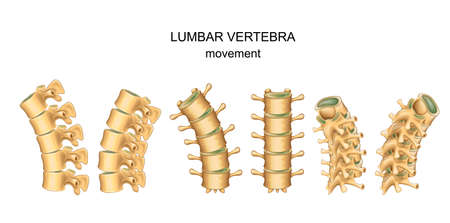 Vector illustration of movement in lumbar vertebrae 向量圖像