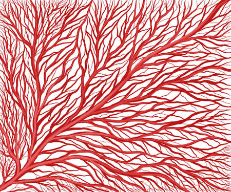 Branched capillary vasculature