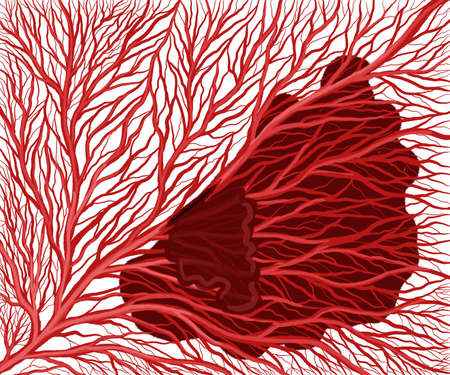 illustration of a branched capillary vasculature. Stroke