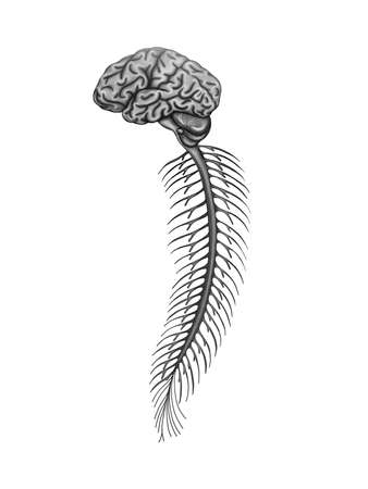 Illustration of the brain and spinal cord