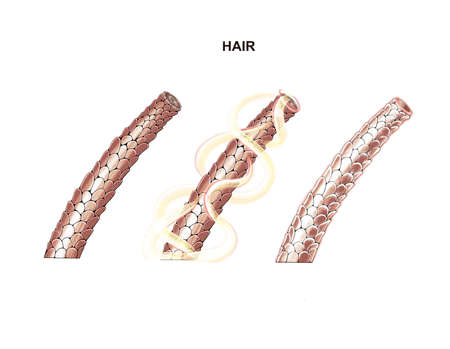 illustration of the process of nutrition and hair strengthening, lamination, botox