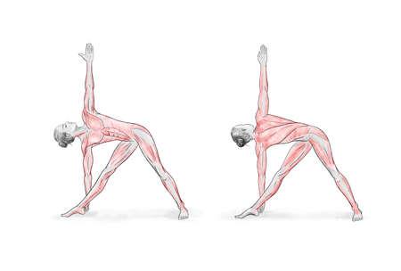 Illustration of the yoga poses (asanas)