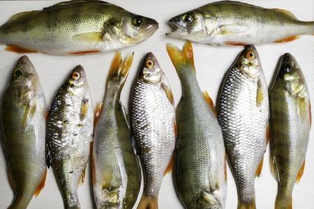 Fish river roach, sea bream isolated on white background Scardinius erythrophthalmus 免版税图像 - 107693648