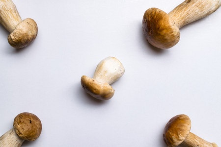 Autumn Cep Mushrooms. Ceps Boletus edulis, isolated on white Cooking delicious organic mushroom. Gourmet food