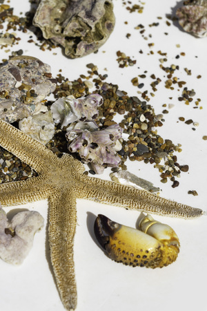 Seashells, crab claw, stones, corals, starfish on white background, travel conception summer vibes, selective focus Stock fotó