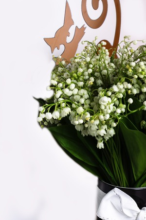 spring mood, Lily of the valley flowers blossom on white background with decorative cat
