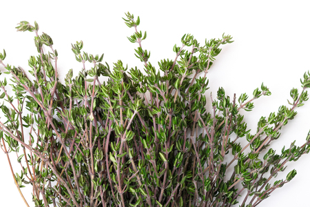 Thyme fresh herb isolated on white background copy space Imagens