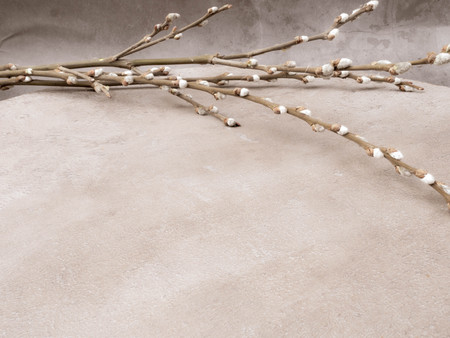 Willow background for Palm Sunday. Willow catkins copy space easter, willow twigs.