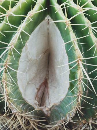part of cactus, Vagina symbol, female genital organs symbol, Women health concept Stock Photo