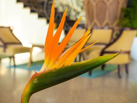 beautiful orange Bird of Paradise flower indoor