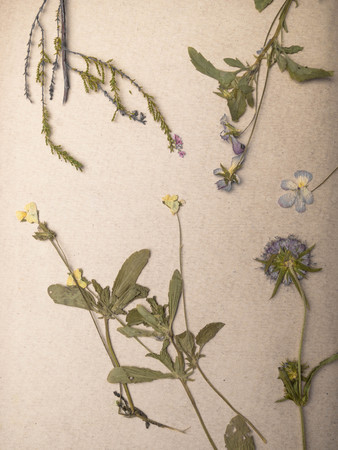 Beautiful Composition with dry flowers plants on notebooks close up