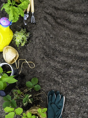 Copyspace frame with gardening tools, seedling on soil background copy space