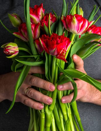 Man holding bouquet of beautiful spring red tulips closeup. International Womens Day