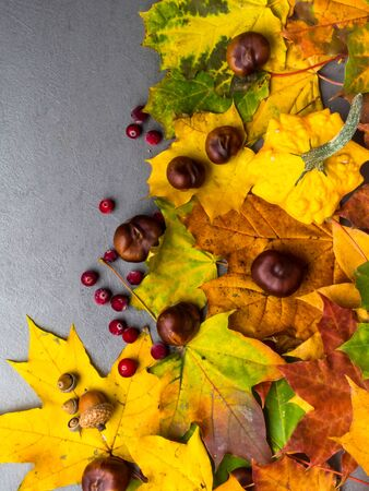 Autumn multicolored leaves and pumpkins, acorns, chesnuts on concrete background with copy space, flat lay, minimal concept, thanksgiving and autumn holiday 版權商用圖片