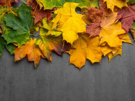 Fall Maple Leaves in Full Color, Autumn composition. Autumn, fall, thanksgiving day concept. Flat lay, top view