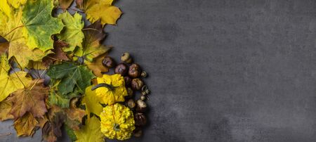 banner of seasonal autumn background, pumpkins, maple colorful leaves, acorn, chesnuts on a grey concrete table with copy space