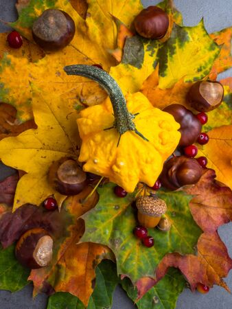 Thanksgiving background: Pumpkins, chestnuts, acorns fallen leaves on grey concrete background. Halloween, Thanksgiving day or seasonal autumnal. Design mock up. Stock Photo