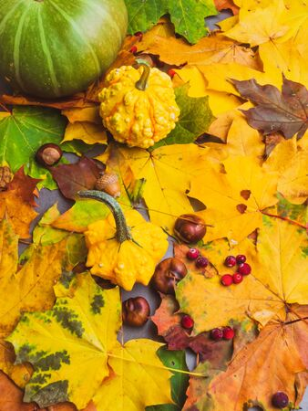 Autumn multicolored leaves and pumpkins, acorns, chesnut, thanksgiving and autumn holiday concept close up Stok Fotoğraf