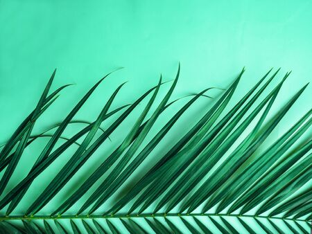 tropical palm leaves on a trendy mint color. Background for travel agency, Copy space