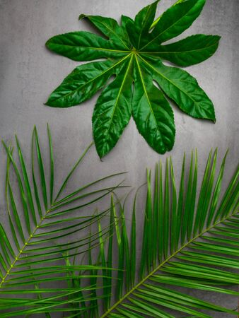 Leaf pattern. Popular plant in interior design, Green beautiful tropical leaves on gray concrete background. Summer concept. Flat lay, top view, copy space