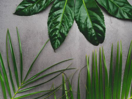 Leaf pattern. Popular plant in interior design, Green tropical leaves on gray concrete background. Summer concept. Flat lay, top view, copy space Foto de archivo - 132050146