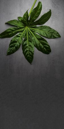 Leaf pattern. Popular plant in interior design, Green tropical leaves on gray concrete background. Summer concept. Flat lay, top view, copy space Reklamní fotografie