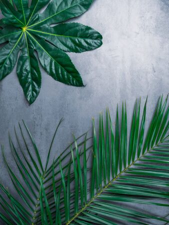 Beautiful green tropical leaves on concrete background. Popular plant in interior design. Reklamní fotografie