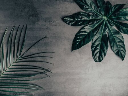 Beautiful green tropical leaves on concrete background. Popular plant in interior design. Фото со стока