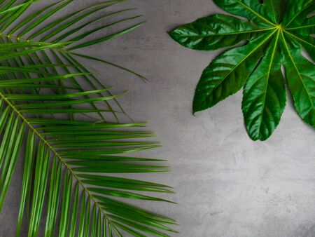 Beautiful green tropical leaves on concrete background. Popular plant in interior design. 스톡 콘텐츠