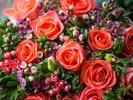 Beautiful living coral roses flowers bouquet, romantic relationship and floral design concept, luxury bouquet flowers as holiday love present on Valentines Day, mother day, weeding, close up, selective focus