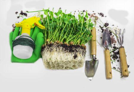 Set of gardening tools, as shovel, rake, atomizer, healthy microgreen with soil, green gloves. Spring gardening tools . Summer garden works concept. Copy space