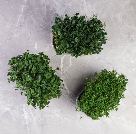 A microgreen is a young vegetable green. A microgreen or Sprouts in plastic boxes are raw living sprout vegetables germinated from high quality organic plant seeds. Fibre high greens Foto de archivo
