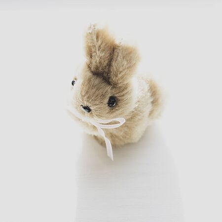 cute easter bunny on white background, Selective focus.