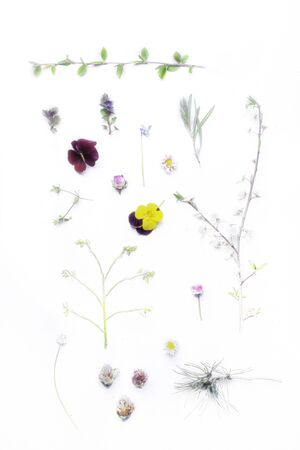 blurred herbal leaf and flower over white background, natural herbal medicine, homeopathic concept
