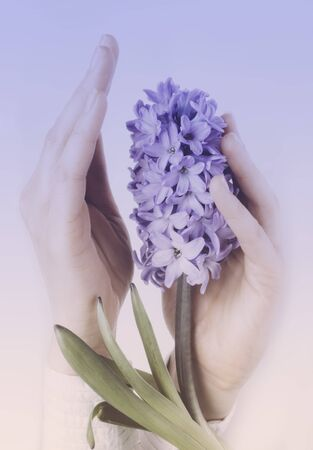 A beautiful women hand with manicure holds a fresh hyacinth flower isolated on white background. Side view. March 8, women's day holiday card. Spa and womens theme concept Creative toned