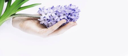 A beautiful women hand with manicure holds a fresh hyacinth flower on a white background. Side view. March 8, women's day holiday card. Spa and womens theme concept Copy space. Horizontal orientation. Stok Fotoğraf