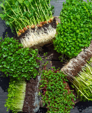 microgreens sprouts on wooden background, vegetable greens. Healthy eating concept rich in fiber, vitamin and antioxidants, close up